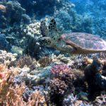 珊瑚を守ってシュノーケリング!オススメ日焼け止め4選と海に優しい紫外線対策。